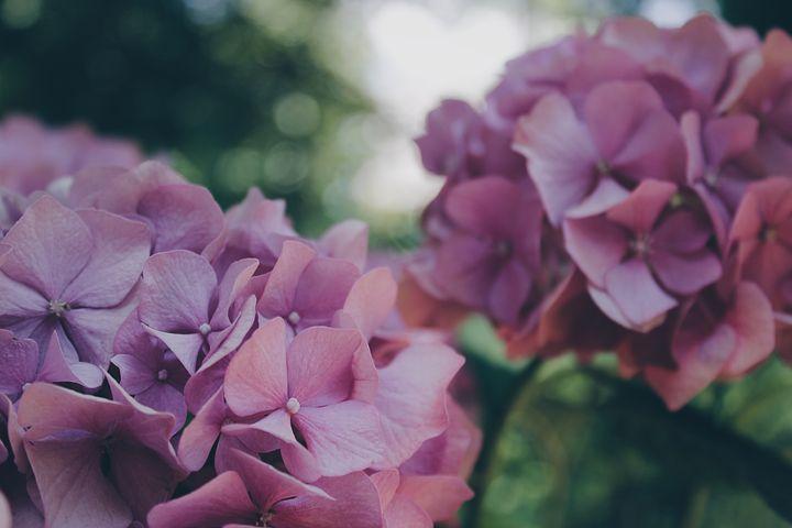 Le rôle du jardinier dans l'entretien des jardins